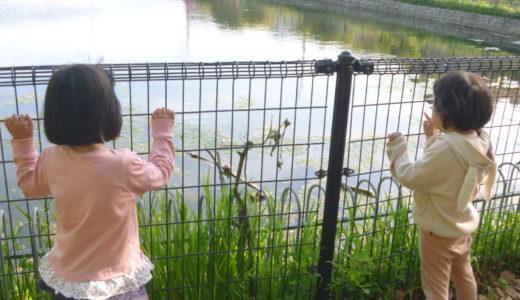 お池のカメ
